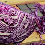 Potted Red Cabbage