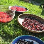 Soft Fruit Squash