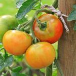 Tomato-Apple Butter